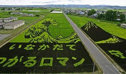450_rice_art1_3